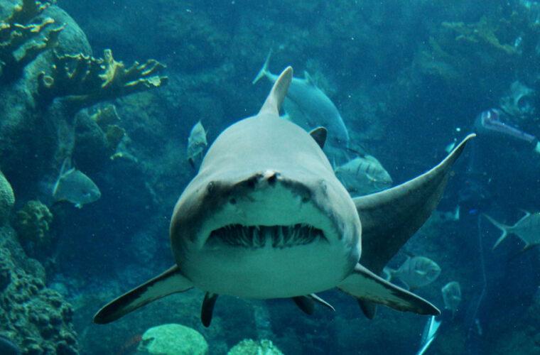 Shark Trivia